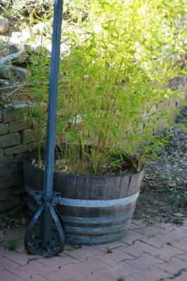 Bamboo in a Barrel