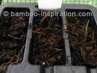 Bamboo Seed Germination Tray