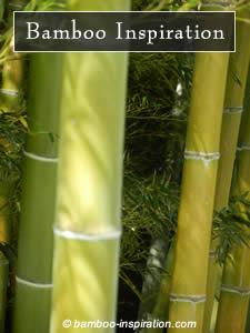 Bamboo Poles Plants