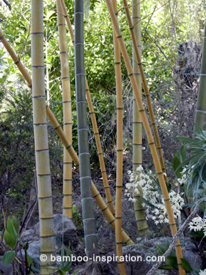 Bamboo garden design idea with rocks and flowers